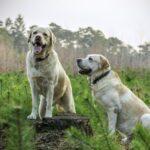 Compre medicamentos veterinarios en Pharmacy4pets
